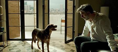 ハミエルと犬